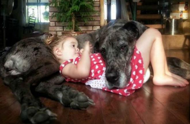i cani fanno bene al corpo e alla mente