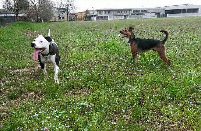 Kira e Rio al parco