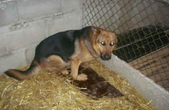Sheba, in un box, prima di essere adottata.