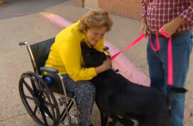Mabel salva la sua proprietaria
