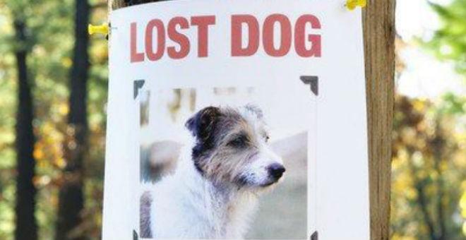 Cosa fare se si trova un cane smarrito