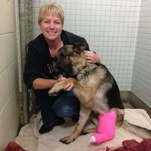 cane salvato sull'autostrada