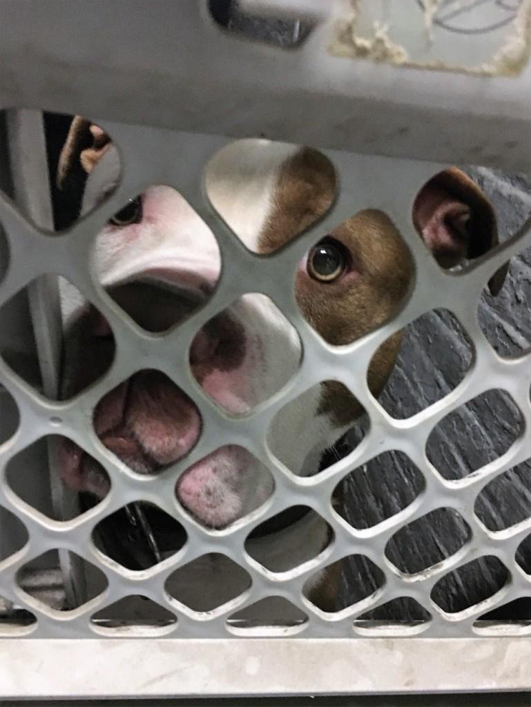 cane chiuso nel sotterraneo