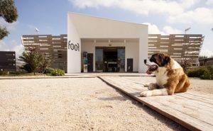 museo dei cani