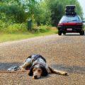 Chi chiamare se si vede un cane abbandonato