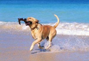 Tutte le spiagge per cani, in Italia e Europa