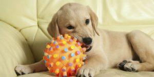 giochi con cane in casa