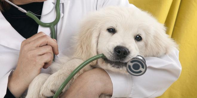 Come far vivere bene il tuo cane