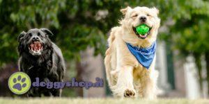 doggy shop