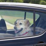 Cosa fare se vedi un cane chiuso in macchina, al sole