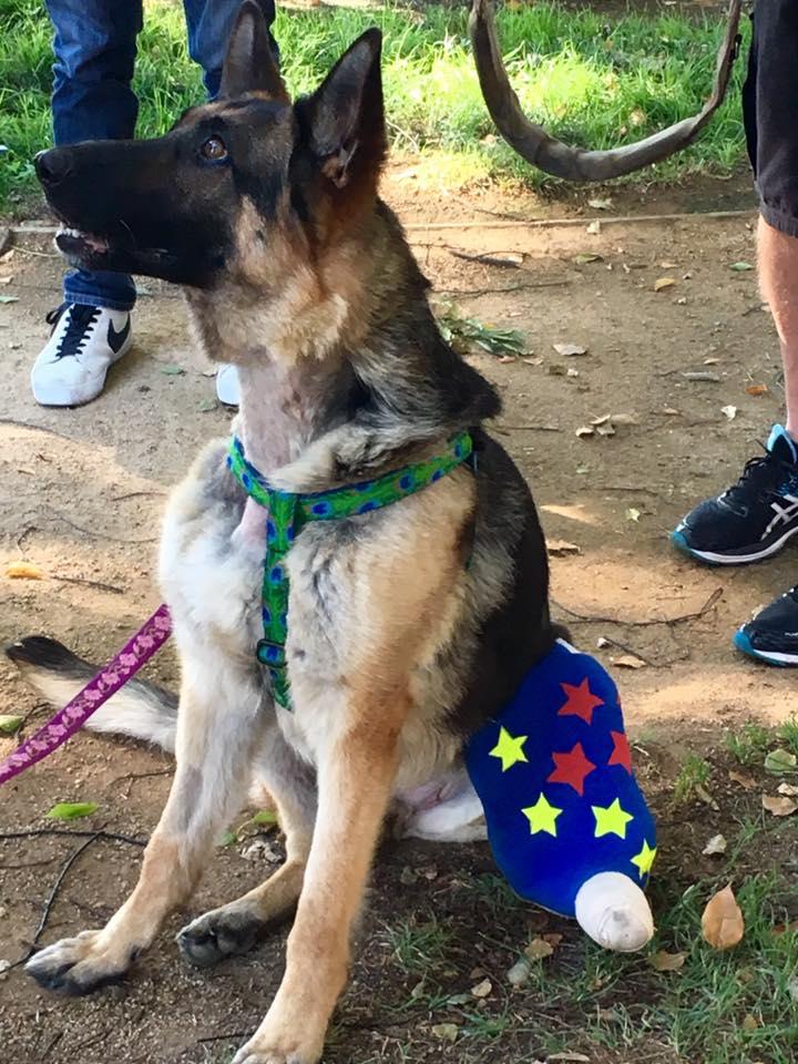 salvato cane sull'autostrada