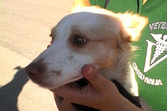 cane salvato da terremoto