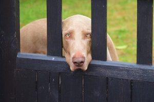 reato lasciare il cane da solo