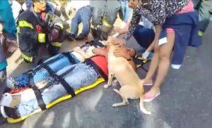 [video] Cane non lascia mai solo il suo amico e lo segue in ospedale