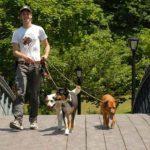 Assicurazione per cani: a cosa serve e quale scegliere