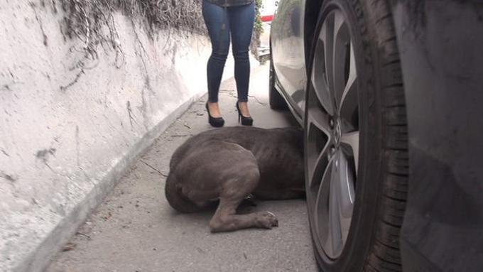 cane-salvato-sotto-auto