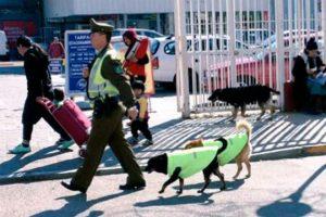 cani eroi poliziotto