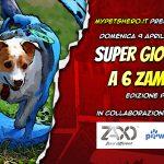 Supergiochi a 6 Zampe presso XPL Pawsitive Training Centre (Padova)