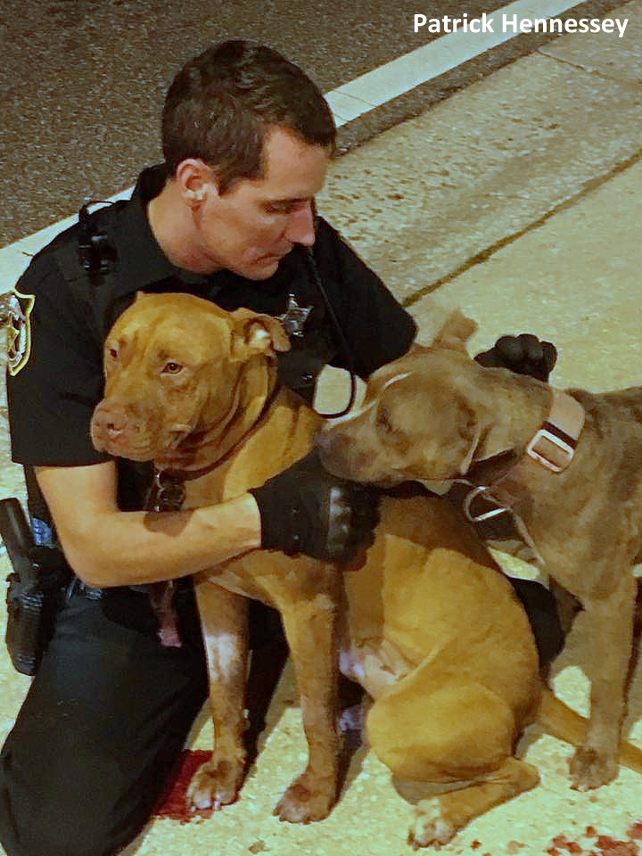 poliziotto-salva-pitbull