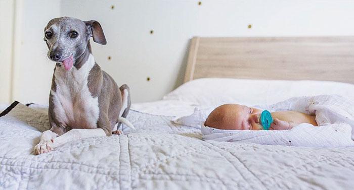 levriero-e-neonato