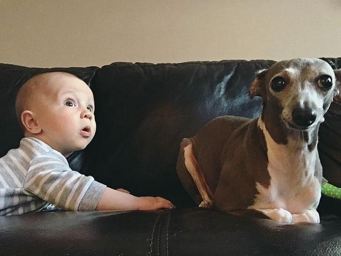 levriero-neonato-amici