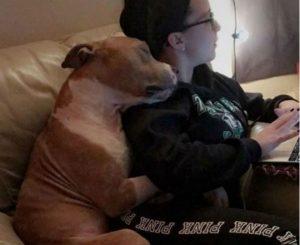pitbull adottato