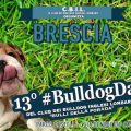 13° #BulldogDay del Club dei Bulldog Inglesi Lombardi