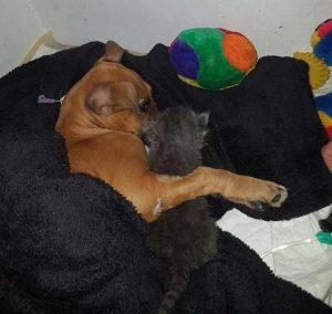 cane-malato-e-gatto