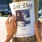 Il tuo cane si è perso? Ecco cosa fare per ritrovarlo