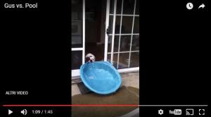 Bulldog VS Piscina. Riuscirà il nostro eroe ad avere la sua piscina interna?