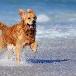 Cani in spiaggia: ecco cosa dice la legge. I divieti sono validi?