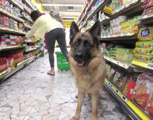 cani al supermercato