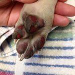Attenzione all'asfalto bollente! Pericolo per i nostri cani