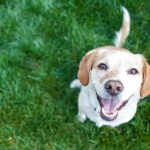 Adozione o acquisto del cane. Come prendere la scelta giusta?