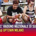 Raduno nazionale di Superdog! 1° Edizione