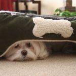 Ansie, paure e fobie nel cane: ecco come comportarsi (prima parte)
