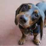 Emozioni e motivazioni: cosa c'è nella mente del cane?