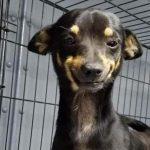 Grazie al suo sorriso salva tanti altri cuccioli, ma anche…