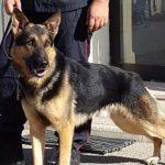 Uomo scomparso da 2 giorni. Cane eroe gli salva la vita