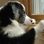 Ansia da separazione, fobia sociale: cos'è l'ansia nel cane?