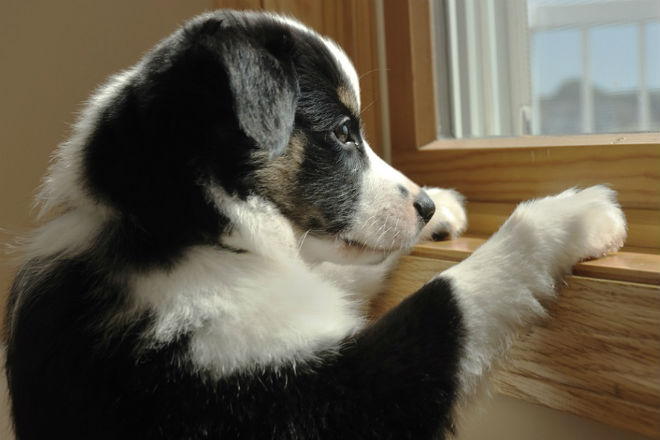 ansia nel cane