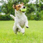 Giocare con il cane: come, ma soprattutto perché è così importante