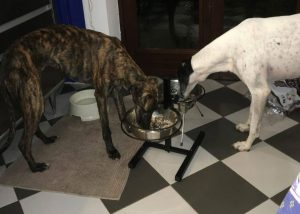 Come scegliere l'alimentazione corretta per avere un cane sano e appagato