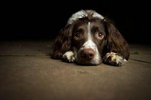 Disturbi dell'umore, stress e nevrosi nel cane: come si presentano? (quarta parte)
